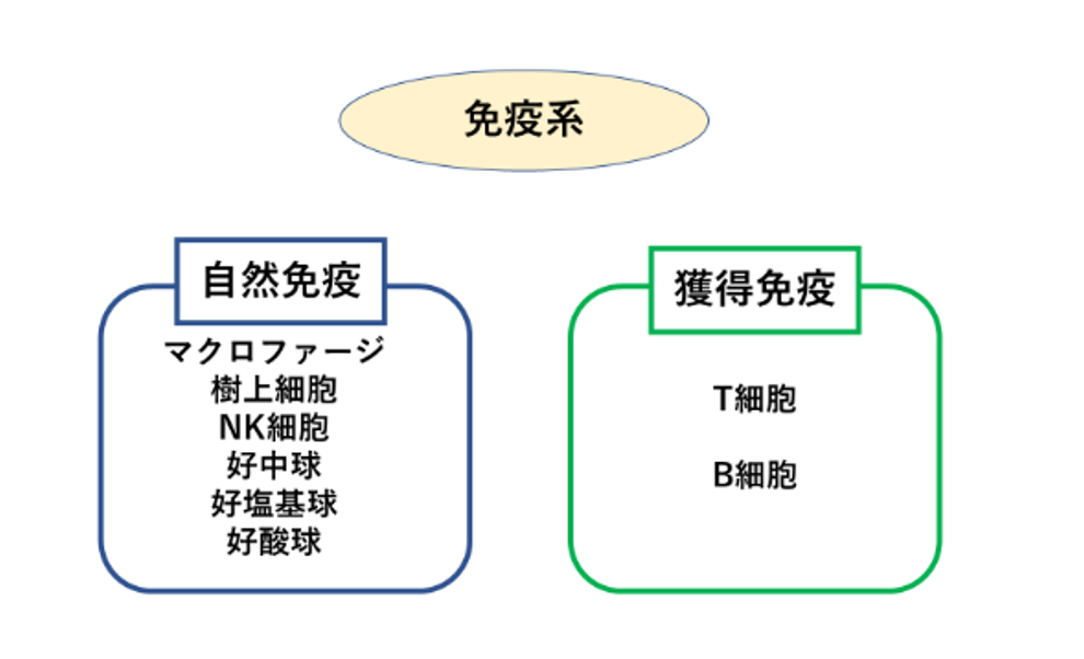 免疫系の2つの分類